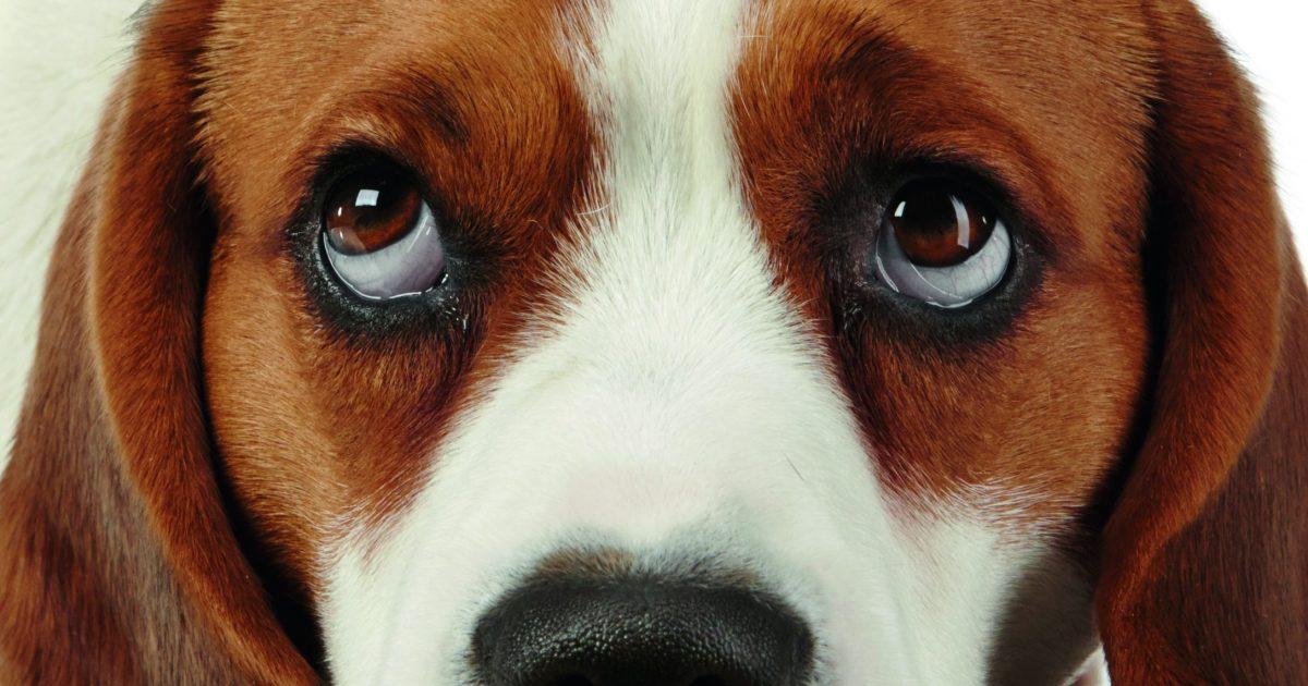 Die grote puppy-ogen zijn voor jou bedoeld…